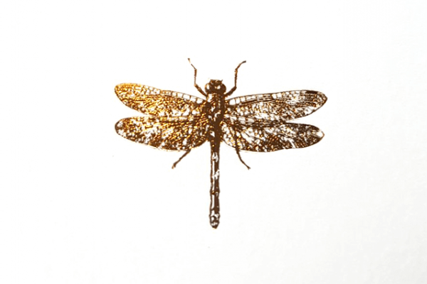 libelle-goudfolie-folie-goud-dragonfly